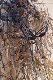 Monet's Water Lilies (2013)